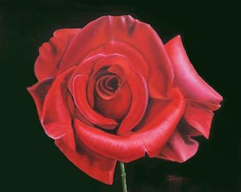 Passionate Rose