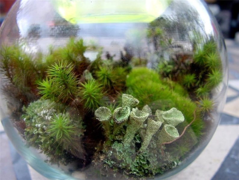 Terrarium kit-Led Terrarium-DIY Large Moss & lichen image 0