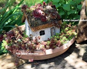 Succulent of the Month Club-Sedums of the Month Club- 6 or 12 months of assorted sedums-succulents-sands-gravel-Wedding Gift-Birthday Gift