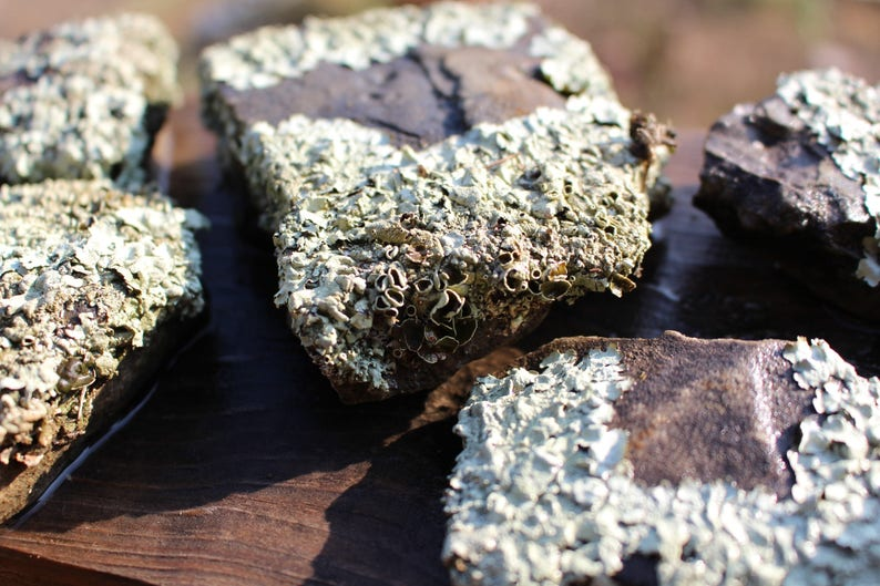 Small lichen covered rocks from 3-5 Desert Landscape Rock-Desert terrariums-Office Paperweight-Weird lichen rock