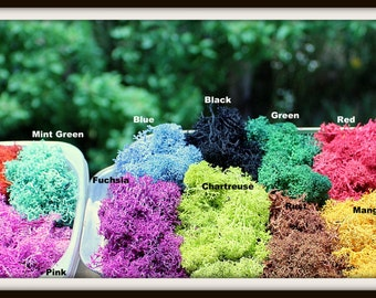Reindeer moss-Preserved lichens-2 oz bag in your color choice-Deer foot Moss-Black-Mango-Light blue and more 2 Oz. Bag Prese...
