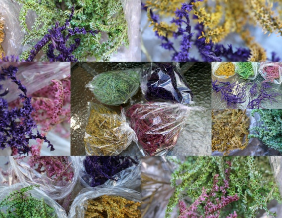 German Statice preserved & dyed-Choose shades of Greens-Yellows-Purples-Pinks