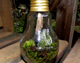 Light bulb Terrarium wild and free-Woodland Moss-Forest Fresh moss-Green light here all the way.