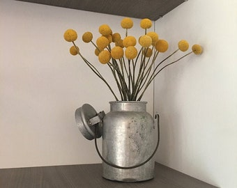Craspedia 2021 crop 12 stems- Choose your length-Billy Balls-Billy Buttons-Dried Yellow Wedding Flowers-Bundle of 12