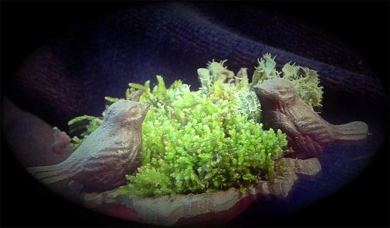 Moss Handbook Diy Terrarium Book Moss Care Lichen Care Hints Etsy