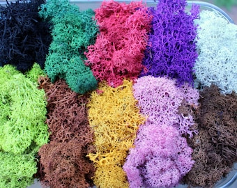 Reindeer moss-Terrarium accessories-Floral moss-1 oz bag in 16 colors-Deer foot Moss-Mango-Red-Gray-Purple-Blue- 1 Oz. Bag Preserved Lichens