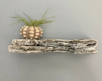 Handmade White Washed Shelf Nautral Found Driftwood Artistry Of Mother Nature Used for  Candles, Birds, Shells, Artwork by Janet Dosenberry
