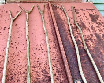 Oak Wood Stang Sticks, Forked Oak Saplings