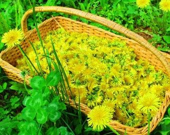 Dandelions, Dried Dandelion Flowers, NH Grown Dried Herbs, Herbal Medicine Beauty Supply Recipe Ingredient, 2018 Wildcrafted Harvest Flowers