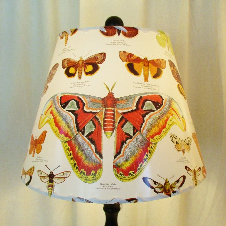 Moth Lamp Shade Butterfly Lampshade Lepidoptera Moth image 0