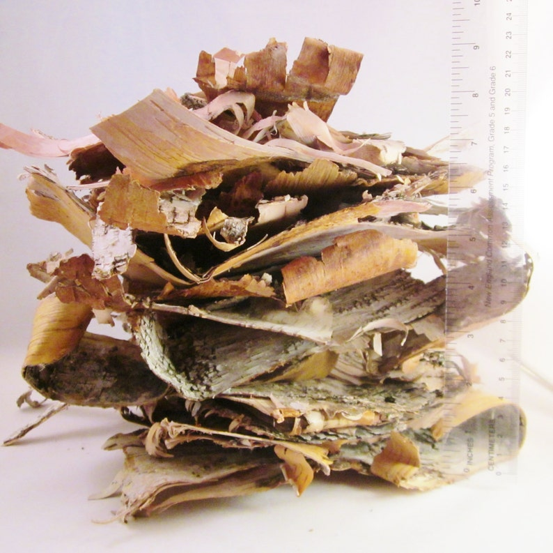 Birch Bark Assorted Size Paper Birch Pieces Bulk White Birch image 0
