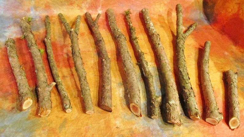 Yew Wand Wood Yew Sticks For Carving image 0