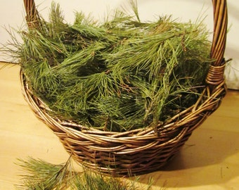 Pine Needles, NH White Pine Tips, Fresh Cut or Dry Wildcrafted Evergreen Needles, Medicinal Pine Tea, Wiccan Apothecary, Pine Incense Smudge