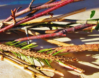 Sacred Wood Bundle, 30+ Assorted Woods for Wiccan and Pagan Rituals