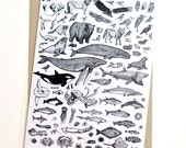 West Coast Species Card...