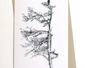 Spruce Tree Card