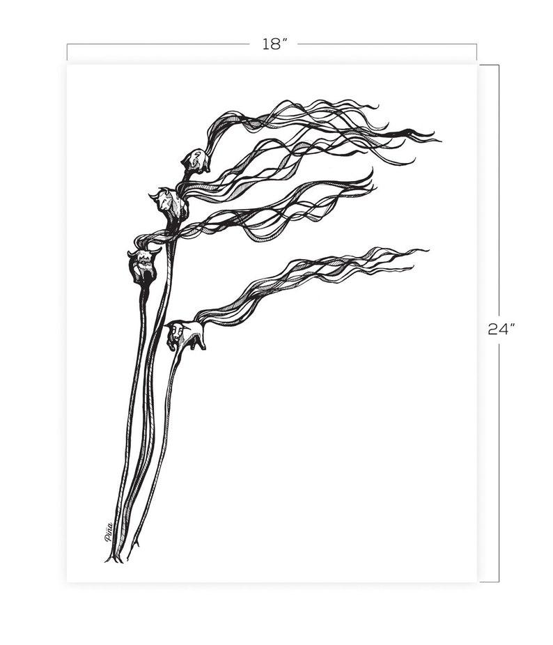 Bull Kelp Downloadable Print 18 x 24 image 0