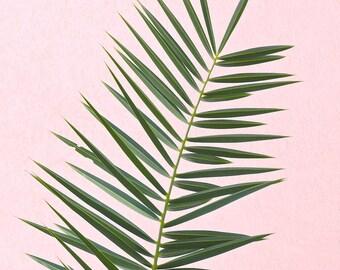 Pink Palm Tree Print, Minimalist Palm Art, Palm Tree Art Print, Tropical Wall Art, Palm Print, Palm Leaf Photography, Pink Green Palm Frond