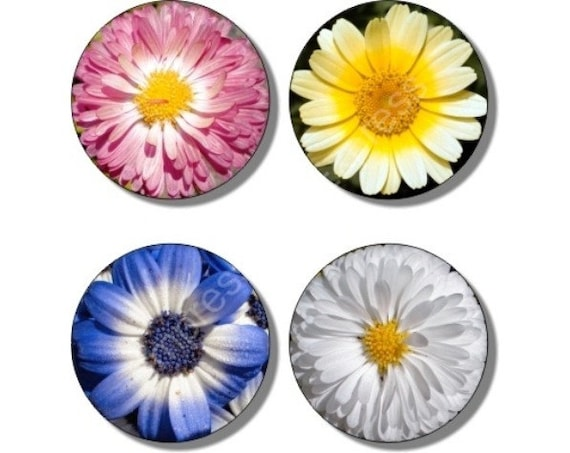 Daisy Flowers Coasters - Set of 4