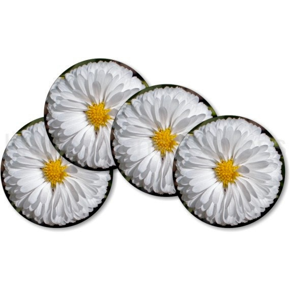 White Daisy Flower Coasters - Set of 4