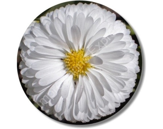 White Daisy Flower Round Mousepad