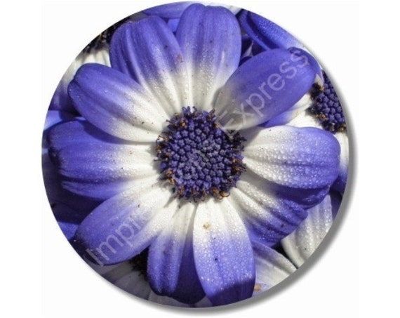 Blue Daisy Flower Round Mousepad