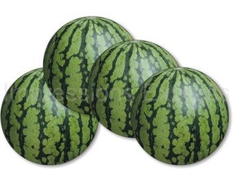 Watermelon Fruit Coasters - Set of 4