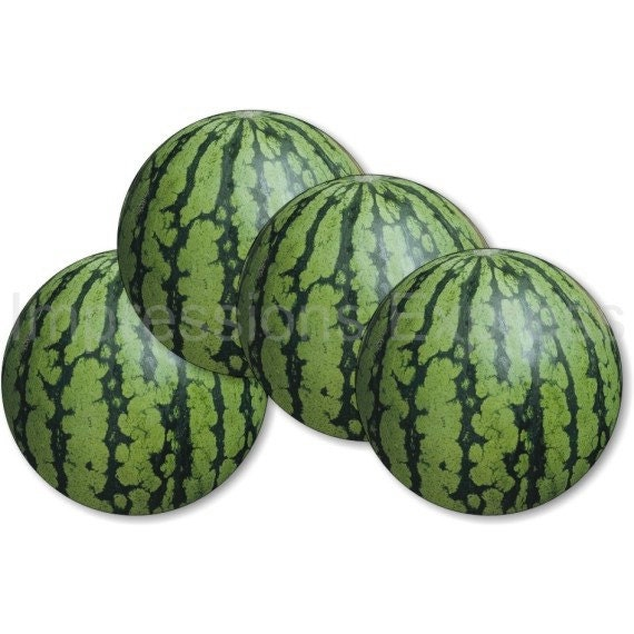 Watermelon Fruit Coasters - Set of 4