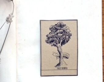 Ex Libris Beech Sticker. 5 Customizable Bookplates with illustration of the Fagus Sylvatica tree