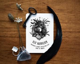 Ilex Aquifolium print. Holly illustration, witchcraft antique botanical prints, magic plant print postcard, witch home decor