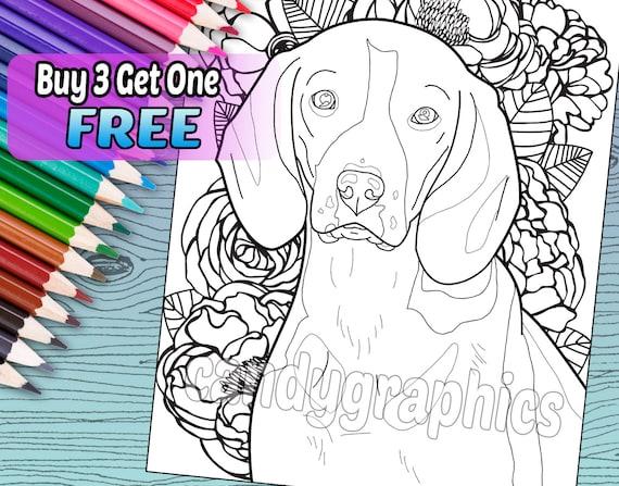 Beagle adulto colorear libro página descarga inmediata | Etsy