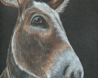 "Donkey art - 8 x 10"" original colored pencil drawing on black paper"