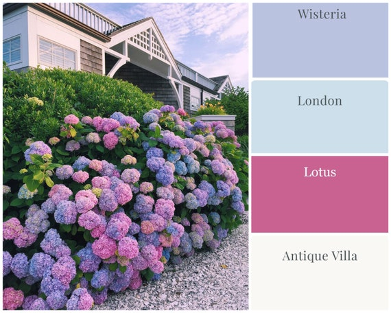 Newport Hydrangeas Set - Wise Owl Chalk Synthesis Paint Bundle - low flat shipping