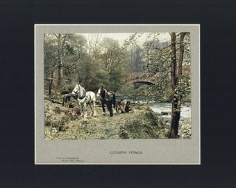 Clearing Timber Antique Illustrated Print from British The Book of the Open Air c1900, edited by Philip Edward Thomas