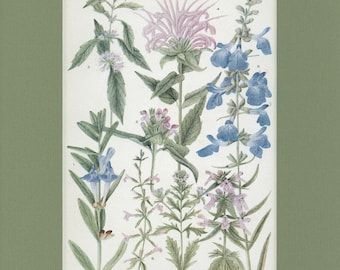 Botanical Flower Print of The Snapdragon Family by Edith Schwartz Clements, from Vintage 1926 Book