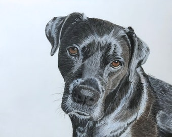 Pet Portrait in Colored Pencil - Custom Pet Drawing - Dog Illustration - Cat Drawing - Commissioned Art of Your Family Pet - Art on Paper