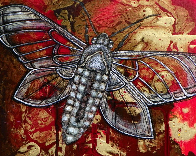 Moth / Butterfly / Insect Art Print