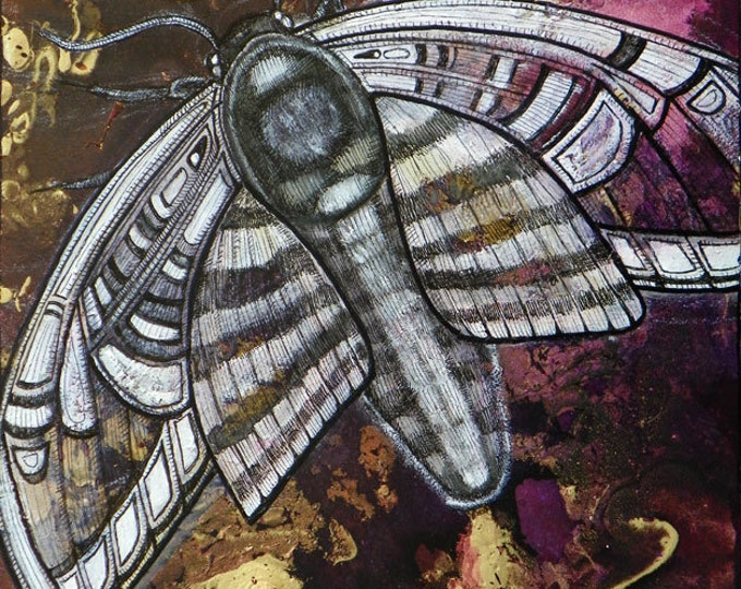 Original Moth Insect Art Painting by Lynnette Shelley