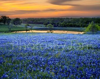 Texas Springtime Sunset Vista Lake Bluebonnets original photograph - Canvas Art Wild Flowers Landscape Photo