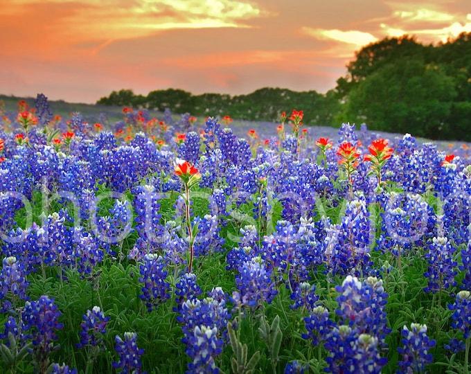 Springtime Sunset in Texas- signed original photograph - Texas Wild Flowers Bluebonnets Landscape