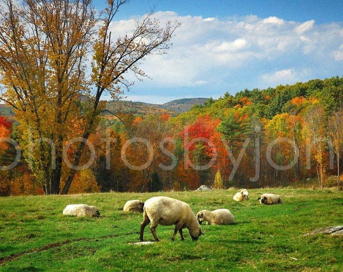 Pasture - 8 x 12 signed original photograph - New Hampshire Landscape