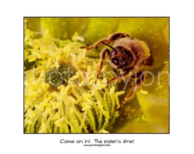Honey Bee Macro Photograph - 11x14 poster style print
