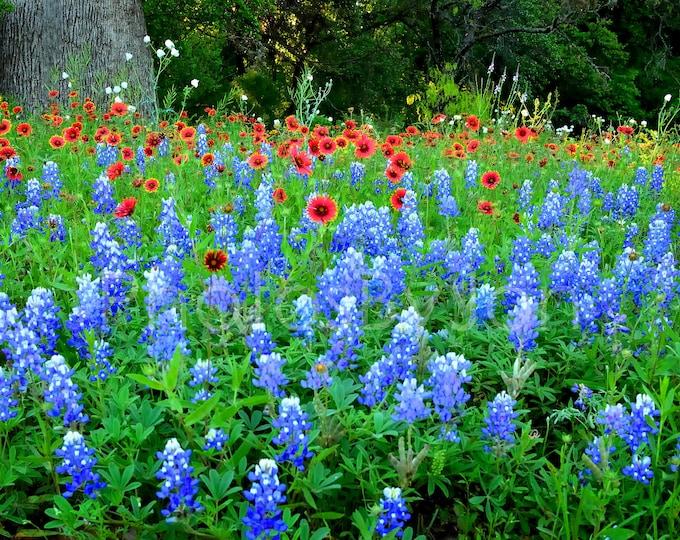 Texas Springtime Hill Country Bluebonnets Indian Blanket original photograph - Canvas Art Wild Flowers Landscape Photo