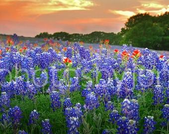 CANVAS Springtime Sunset in Texas- original photograph - Texas Wild Flowers Bluebonnets Landscape