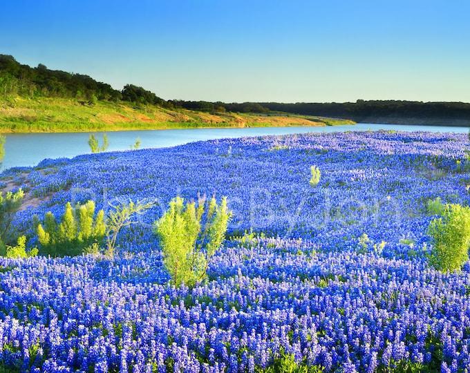 Texas Springtime Vista River Hillside Bluebonnets original photograph - Canvas Art Wild Flowers Landscape Photo