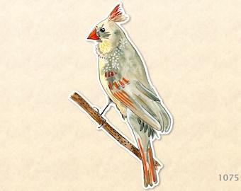 Female Northern Cardinal Sticker State Bird Sticker Watercolor Art Water Bottle Sticker Scrapbook Sticker