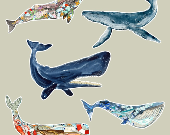 Wild Ones Special! 5 Whale Stickers, Eco Stickers, Animal Stickers, Sea Life Stickers, Laptop Stickers, Water Bottle Stickers