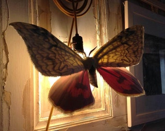 Moth Wall Lamp