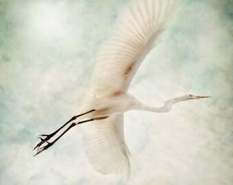 White Flight - Bird in Flight - Nature Photography - Nature Download Decor, Florida Decor, Digital Download, Instant Download