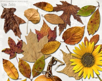 Autumn Medley Leaves digital scrapbooking graphics kit / clipart / altered art / mixed media collage / instant download / printable